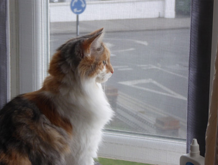 Window protection for cats in South Norwood, London
