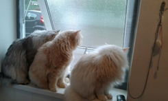 Three lovely cats enjoying the breeze in Yorkshire thanks to Flat Cats