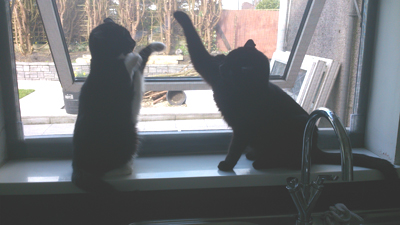 Flat Cats in Wales - Window protection for cats