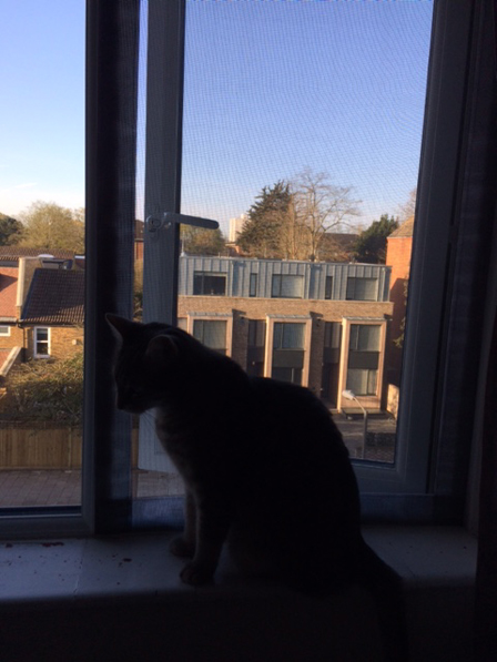 Flat Cats in London