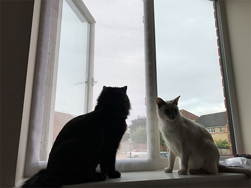 Flat Cats Screens looking after cats in Lowestoft