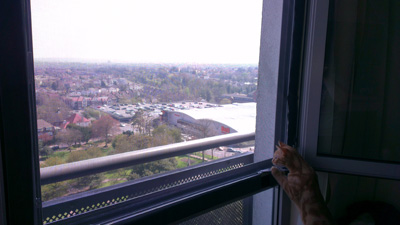 Flat Cats in Sutton Surrey protecting windows