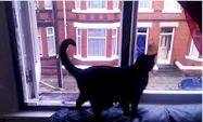 Flat Cats satisfied customer from Liverpool