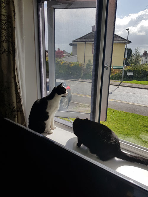 Flat Cats Screens looking after this pair in Chepstow, Monmouthshire