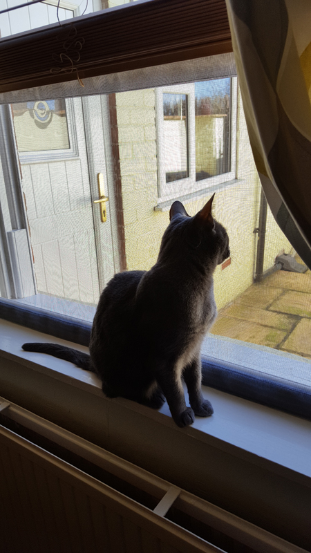 Flat Cats window screens in Dukinfield, Cheshire