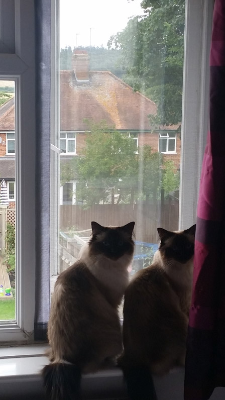 Flat Cats working well in Reading Berkshire